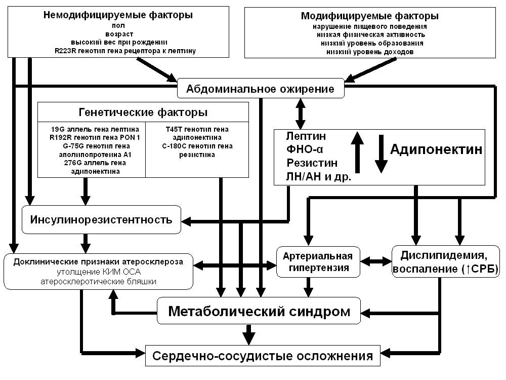 Причины метаболического синдрома и способы его лечения