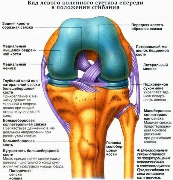Упражнения для укрепления и восстановления связок коленного сустава в домашних условиях