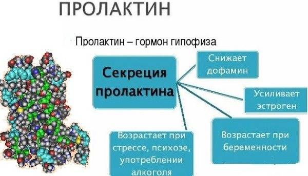 Пролактин (гормон): что это такое? норма пролактина у женщин и мужчин