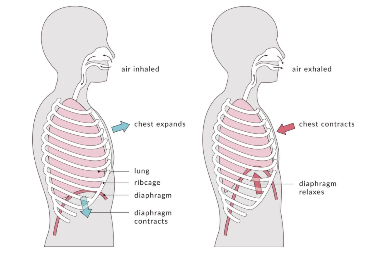 Как правильно дышать?