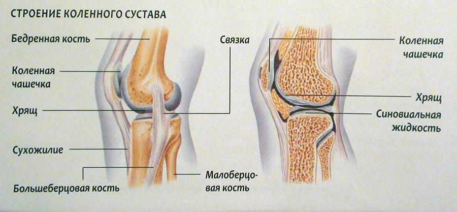 Упражнения для укрепления коленных суставов и связок: тренировка для сухожилий и мышц, лфк авторства дикуля, правила выполнения и меры предосторожности | статья от врача
