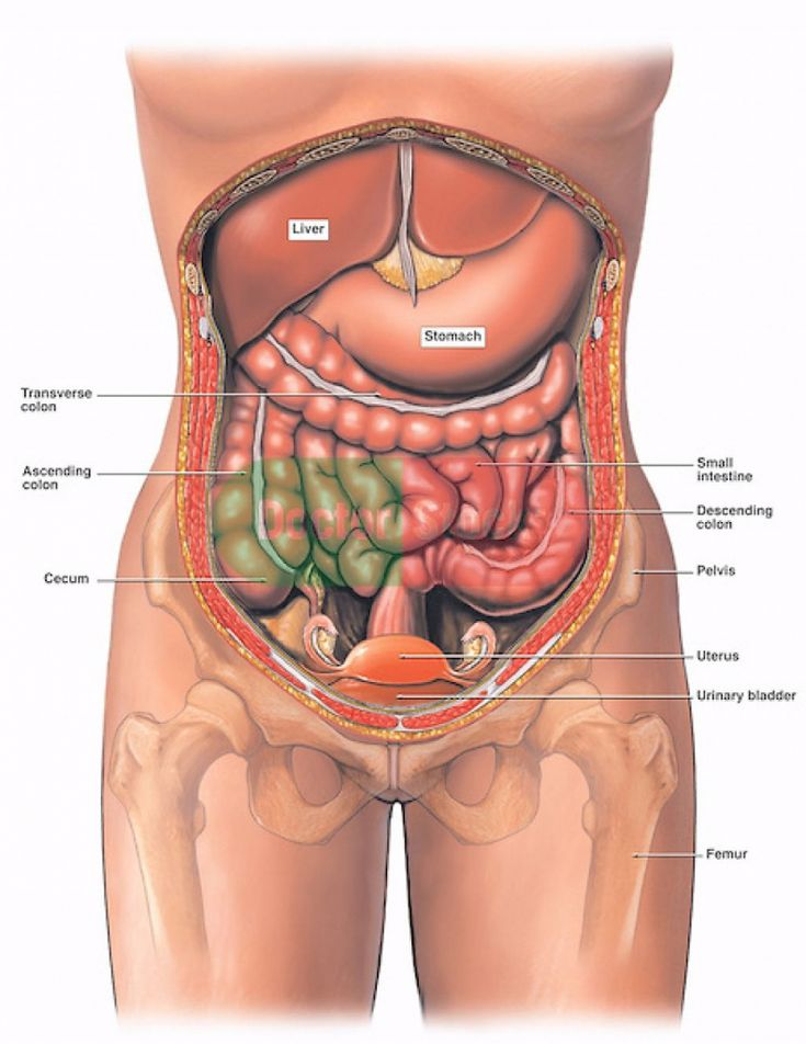 Как именно болит поджелудочная железа у человека и где она находится? - семейная клиника опора г. екатеринбург