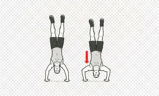 Вертикальные отжимания от пола в стойке на руках вниз головой: какие мышцы работают, техника выполнения