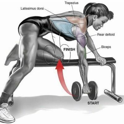 Упражнения на спину со штангой и гантелями — программа тренировок в зале