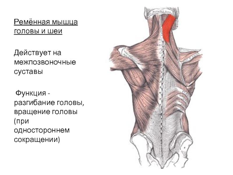 Болят мышцы головы, шеи и затылочной части: напряжение и ломит
