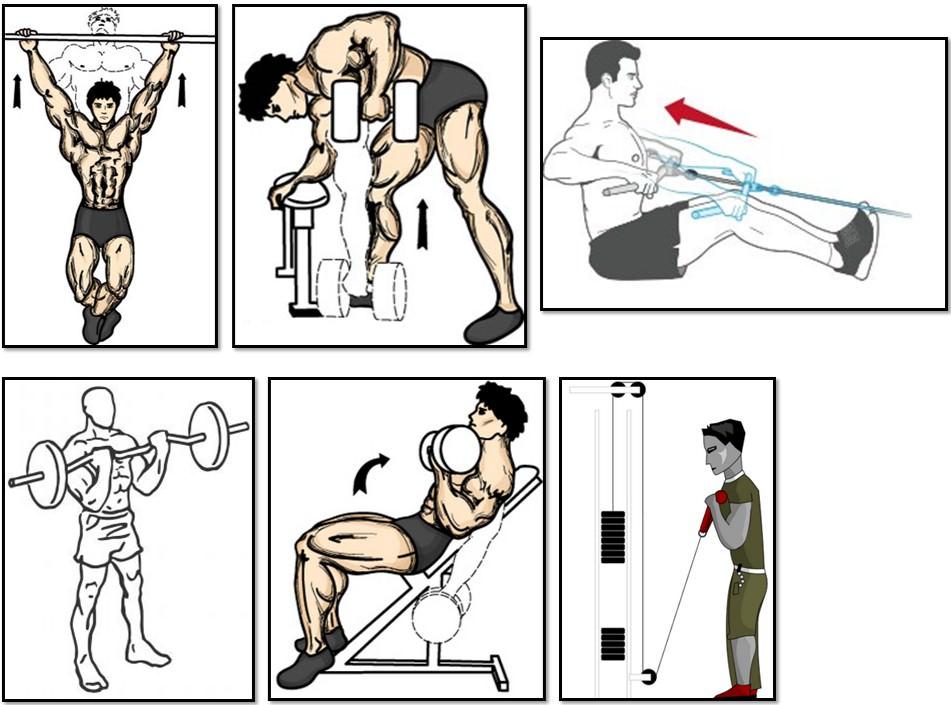 Лучшие упражнения на плечи в тренажерном зале и дома