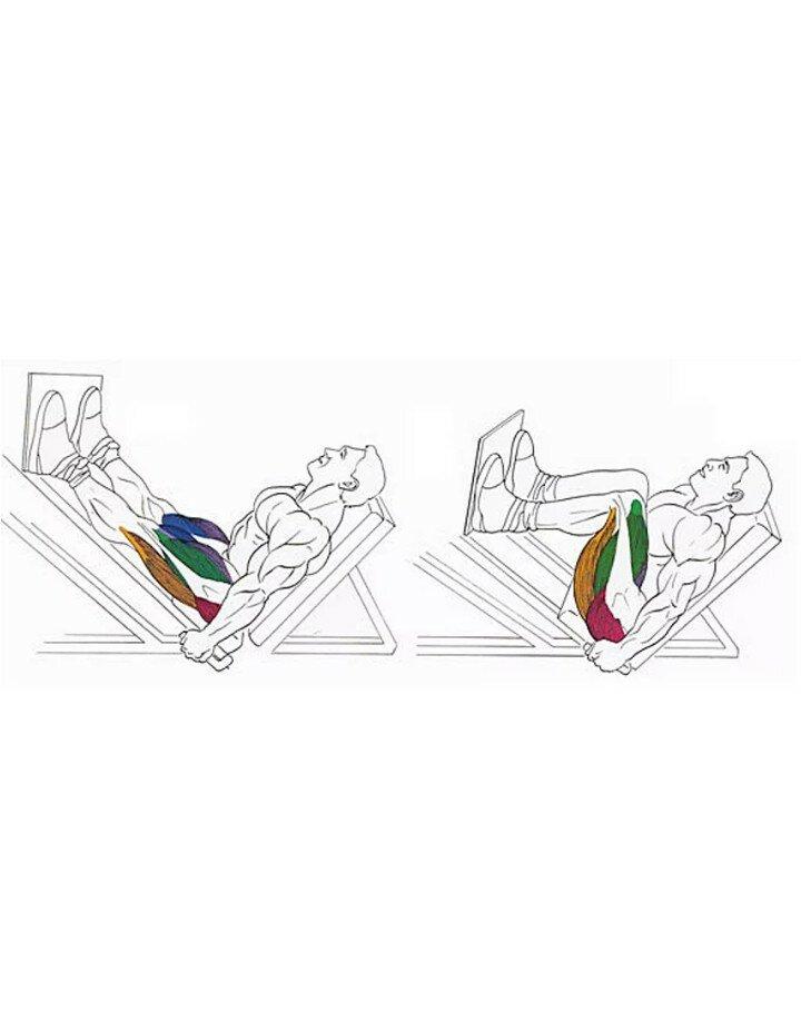 Какими упражнениями можно заменить жим ногами в зале и дома