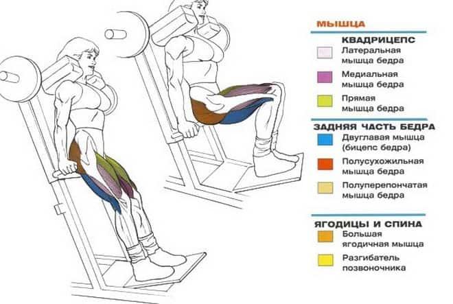 Упражнения для тренировки квадрицепса бедра