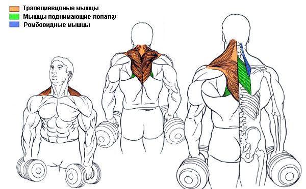 Отжимания на брусьях! техника выполнения упражнения и другие важные фишки