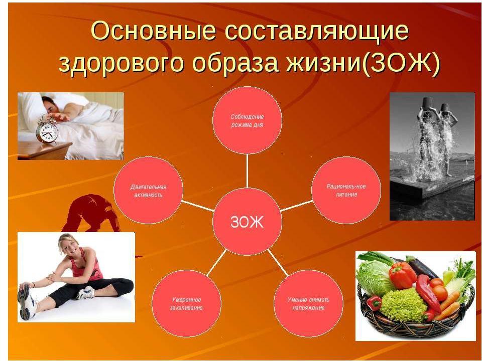 Что такое зож - основы и правила здорового образа жизни