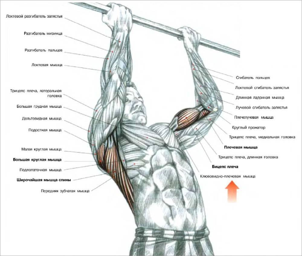 Десять упражнений, которые помогут улучшить свои подтягивания.