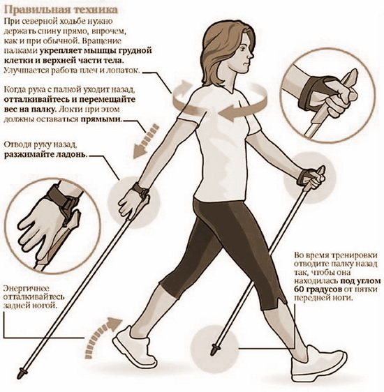 Техника скандинавской ходьбы для начинающих │ лучшие советы