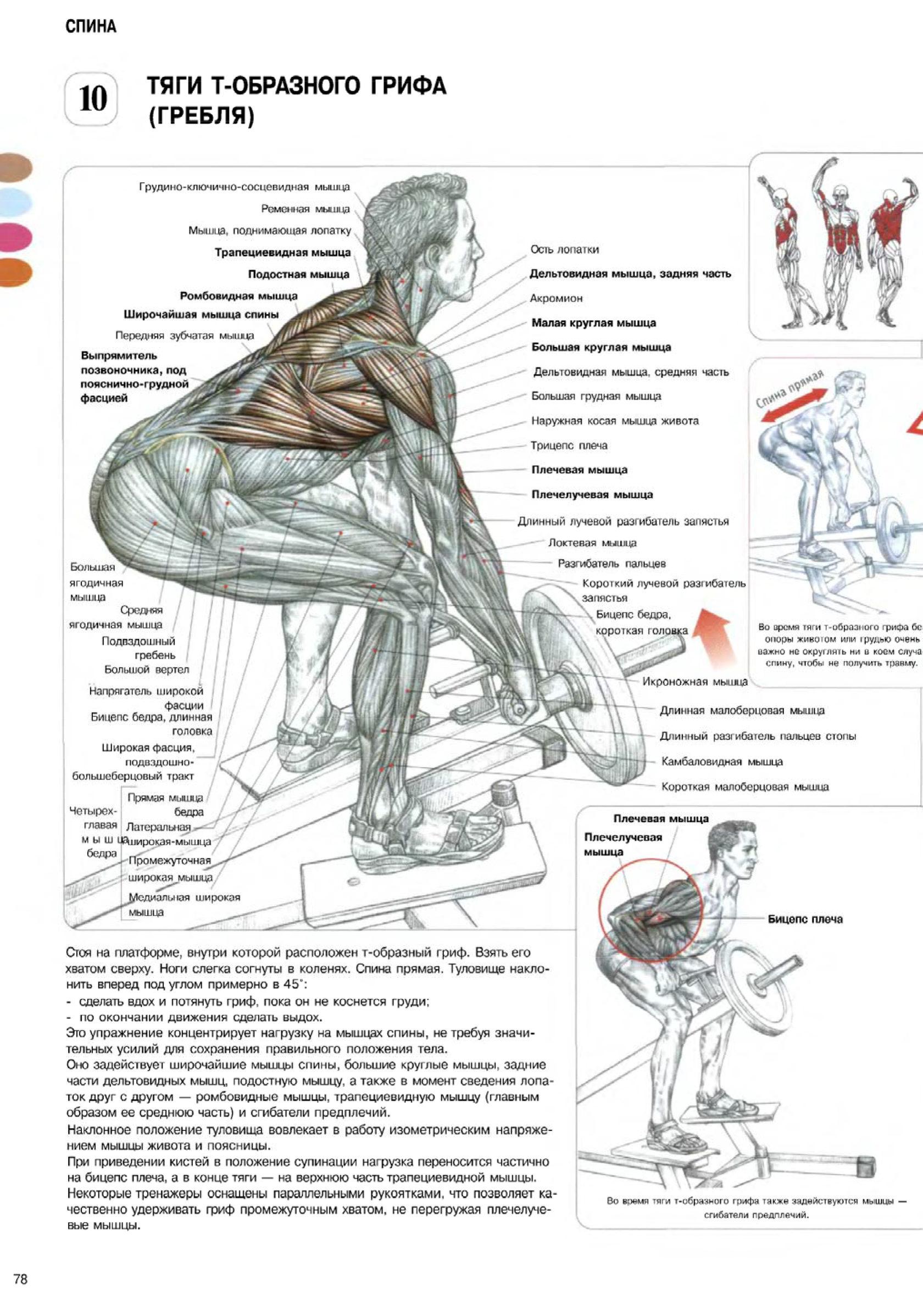 Т-тяга грифа: видео и фото упражнения