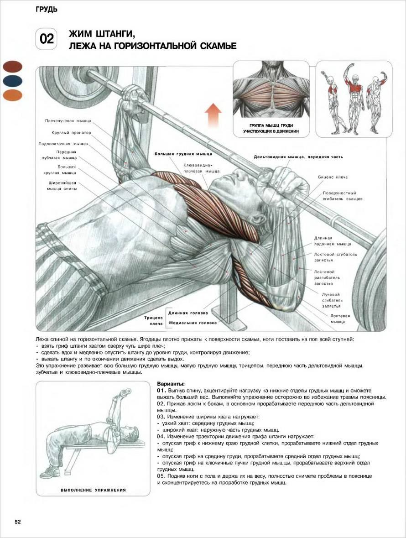 Мышцы после 50 лет