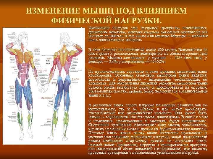 Как и от чего растут мышцы? как ускорить рост мышц?