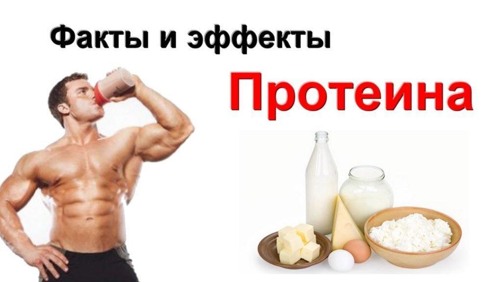 Виды протеина в спортивном питании