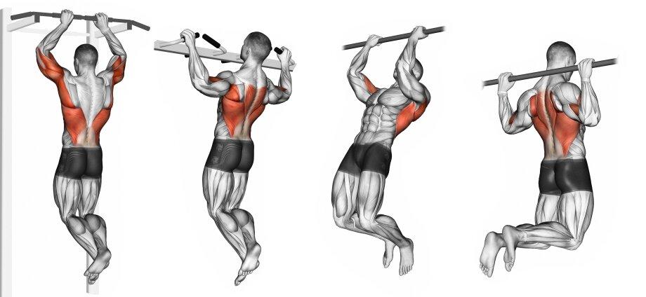 Мышцы работающие при подтягивании разным хватом