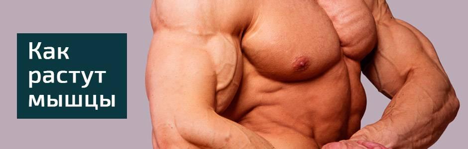 Как вызвать гиперплазию мышц?