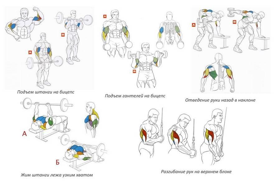 Лучшие упражнения с гантелями на все группы мышц