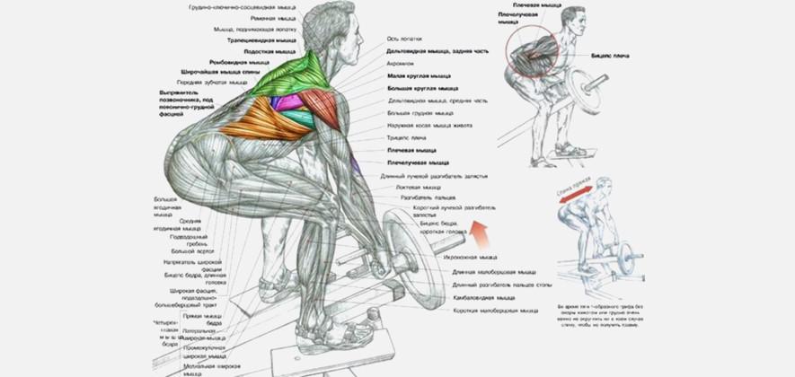 Тяга штанги к поясу: варианты и техника выполнения