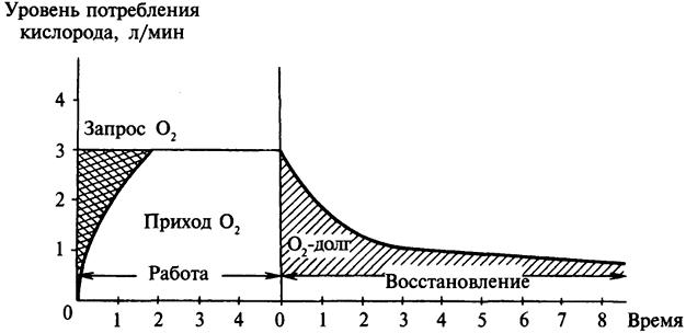 Понятие о кислородном долге.