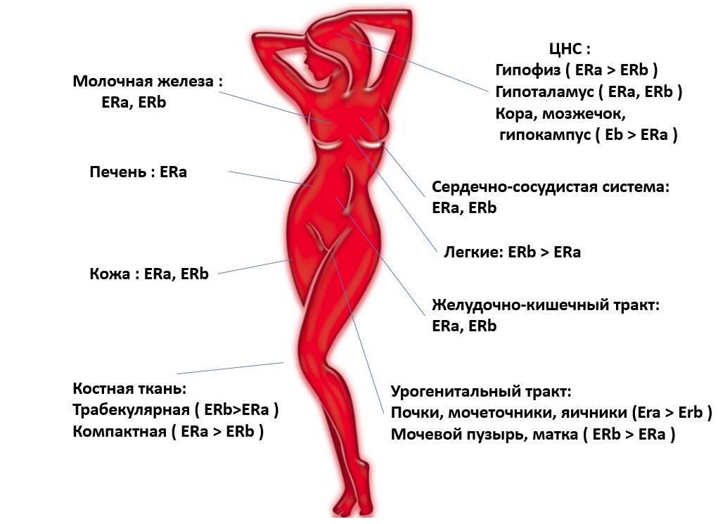 Как снизить эстрогены у женщин: 10 способов снижения эстрогенов