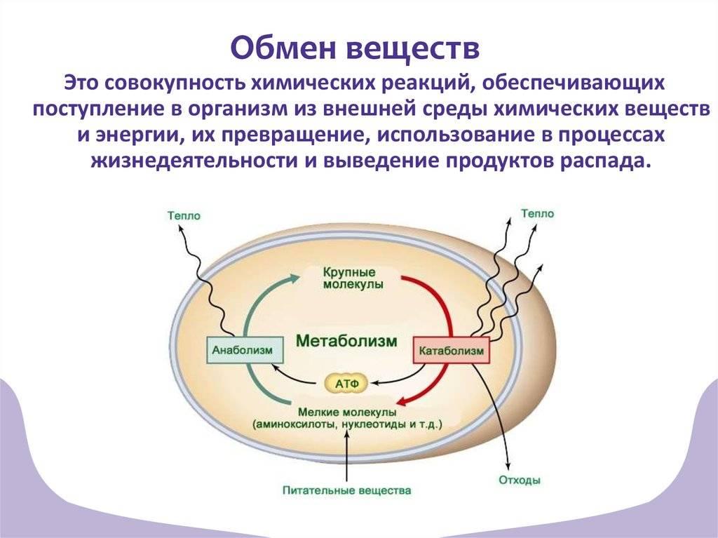 Нарушение обмена веществ : причины, симптомы и лечение | компетентно о здоровье на ilive