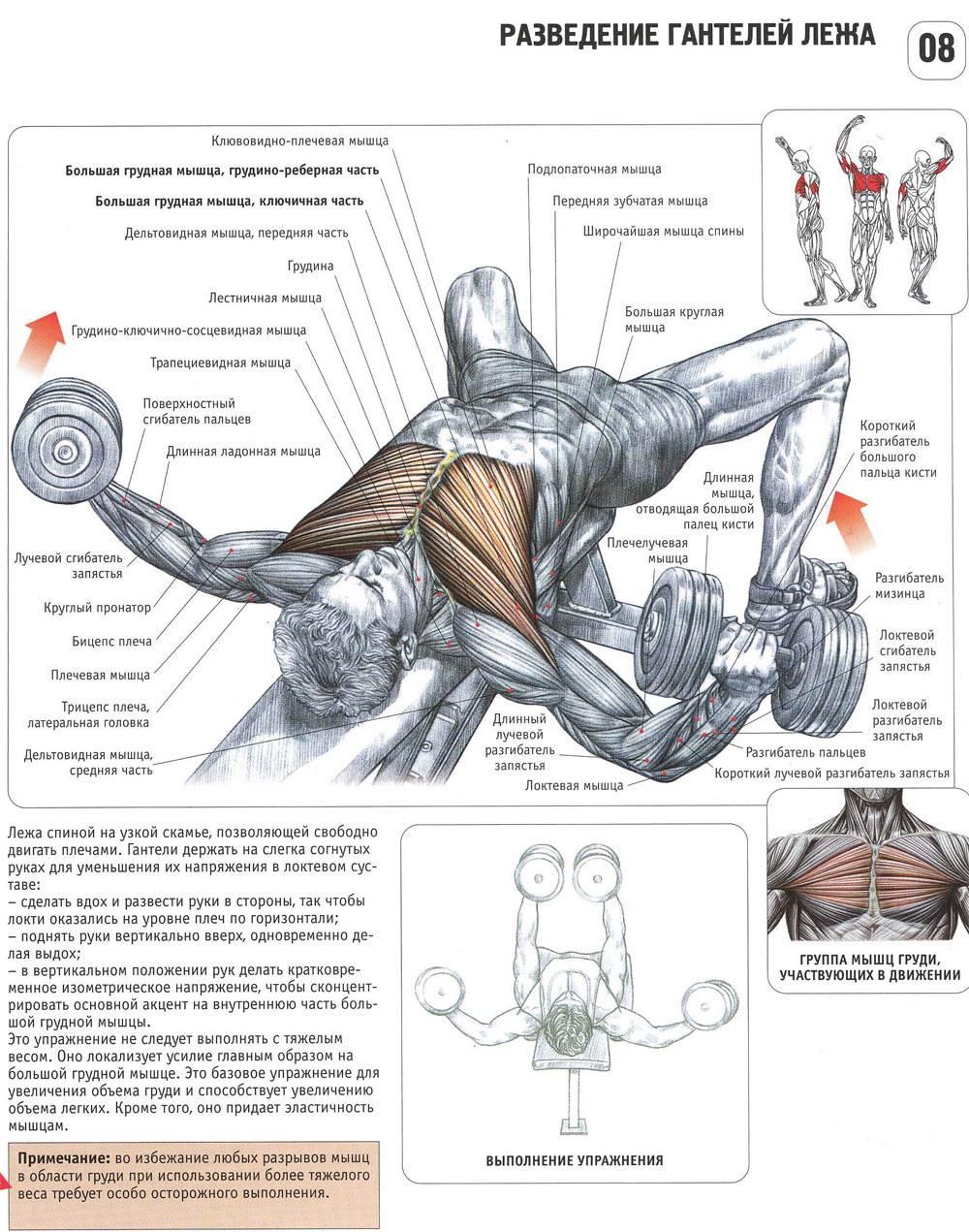 Программа для полноценной проработки грудных мышц – зожник  программа для полноценной проработки грудных мышц – зожник