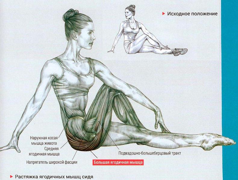 Растяжка ягодичных мышц: упражнения для домашних условий и спортзала
