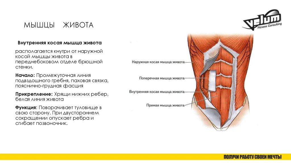 Упражнения на поперечную мышцу живота: эффективные и простые