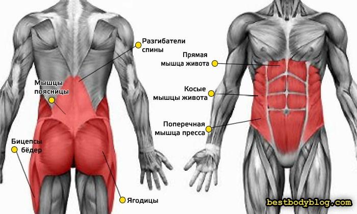 Мышцы кора что это такое и какими упражнениями их укреплять