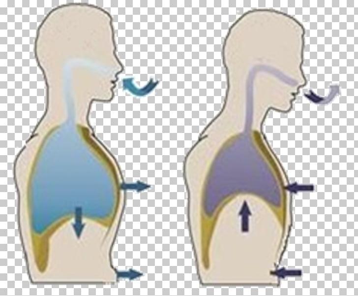 Диафрагмальное дыхание – как выполнять правильно
