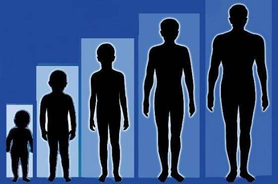 Как увеличить рост человека
