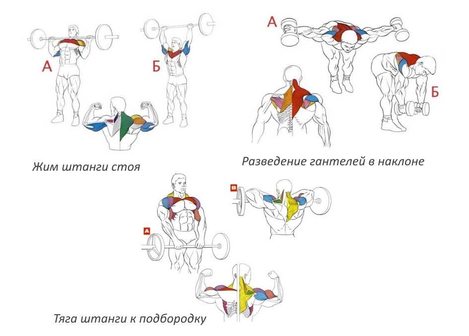 Упражнения для мышц рук в домашних условиях
