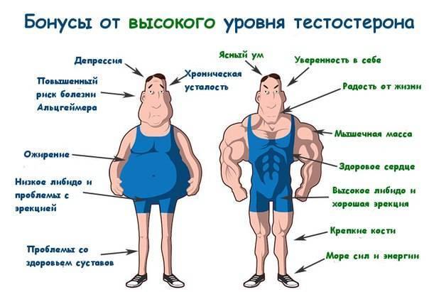 Диета для повышения тестостерона