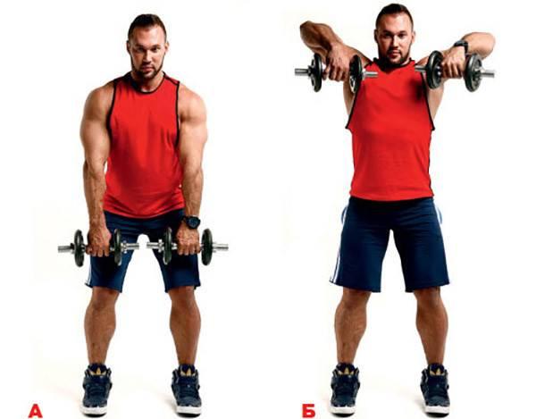 Шраги с гантелями: техника выполнения упражнения, какие мышцы работают