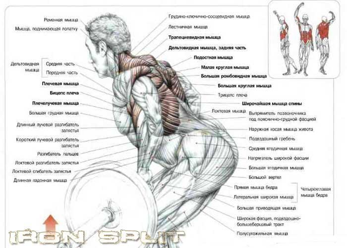 Как сделать мышцы рельефными.