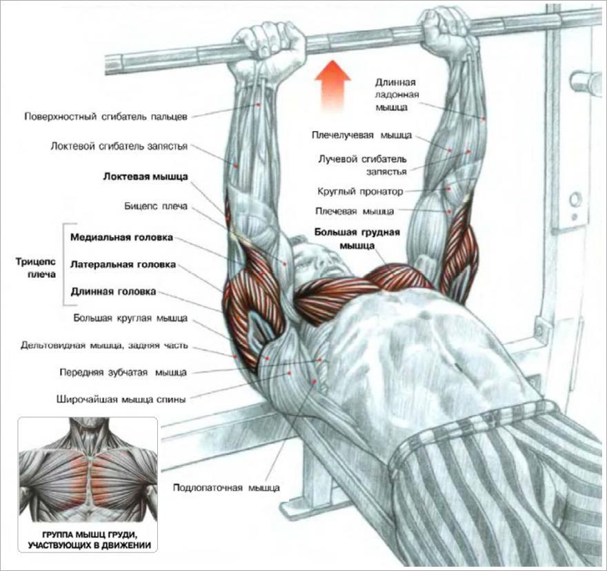 Как быстро накачать мышцы в домашних условиях, лучшие упражнения