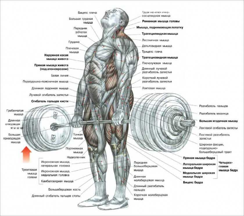 Почему не растут мышцы от тренировок, и как заставить их расти?