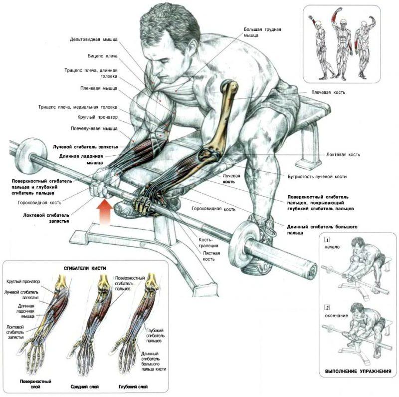 Упражнения для мышц рук. какие лучше упражнения, чтобы накачать руки