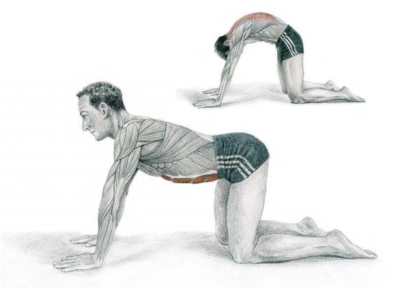 Растяжка мышц спины, рук, ног и пресса - упражнения в домашних условиях   women planet