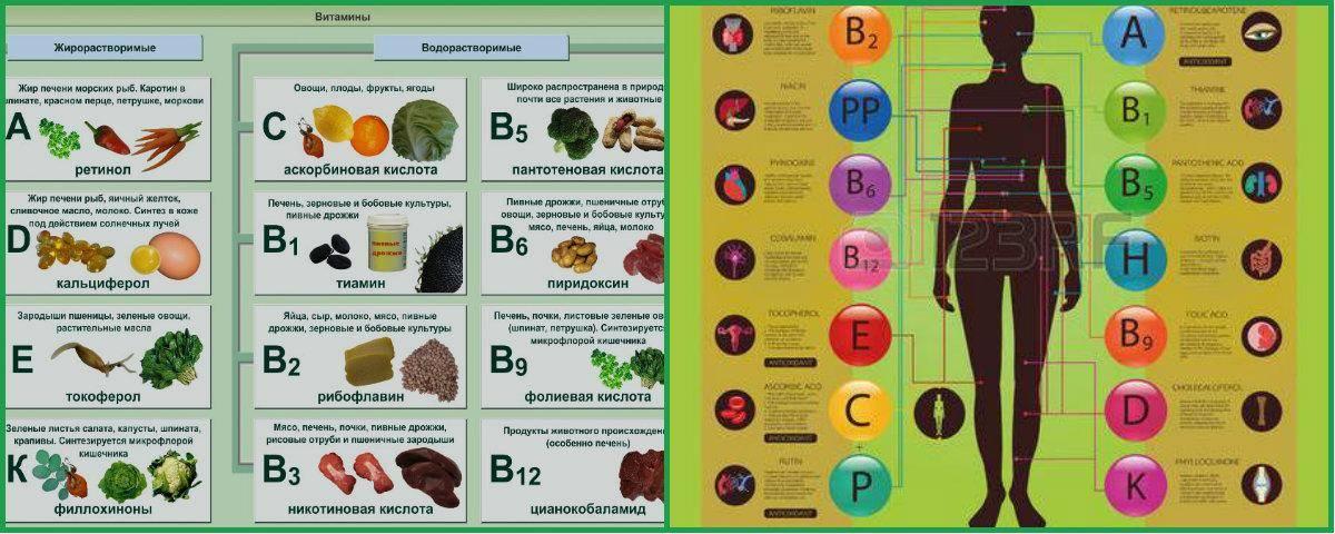 Витамины b1, b6, b12: польза и вред, на что влияют, для чего применяют, свойства