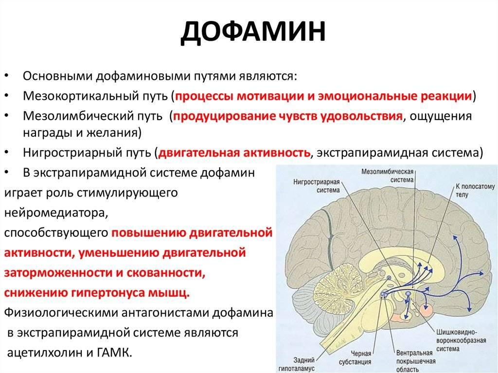 Что такое гормон дофамин и как он влияет на организм