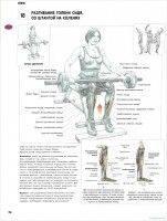 Базовые упражнения, направленные на все группы мышц