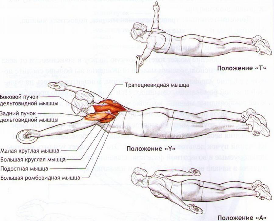 Упражнение лодочка для спины - техника выполнения и какие мышцы работают