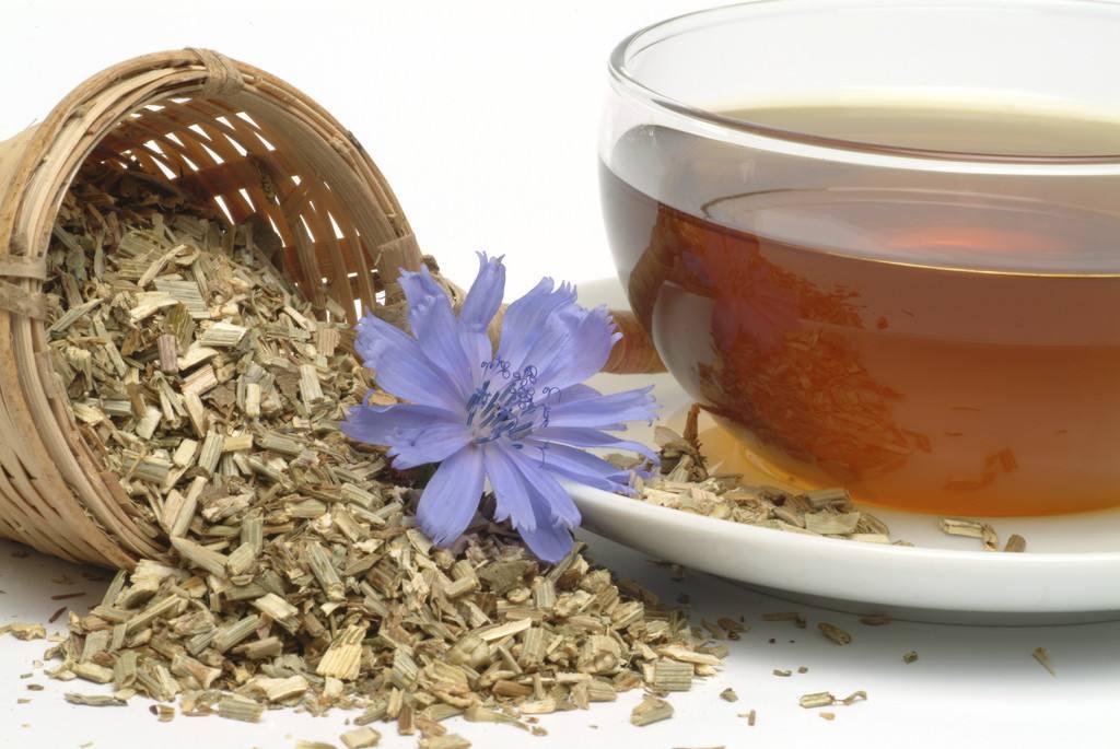 Цикорий – польза и вред для здоровья женщин и мужчин, народные рецепты