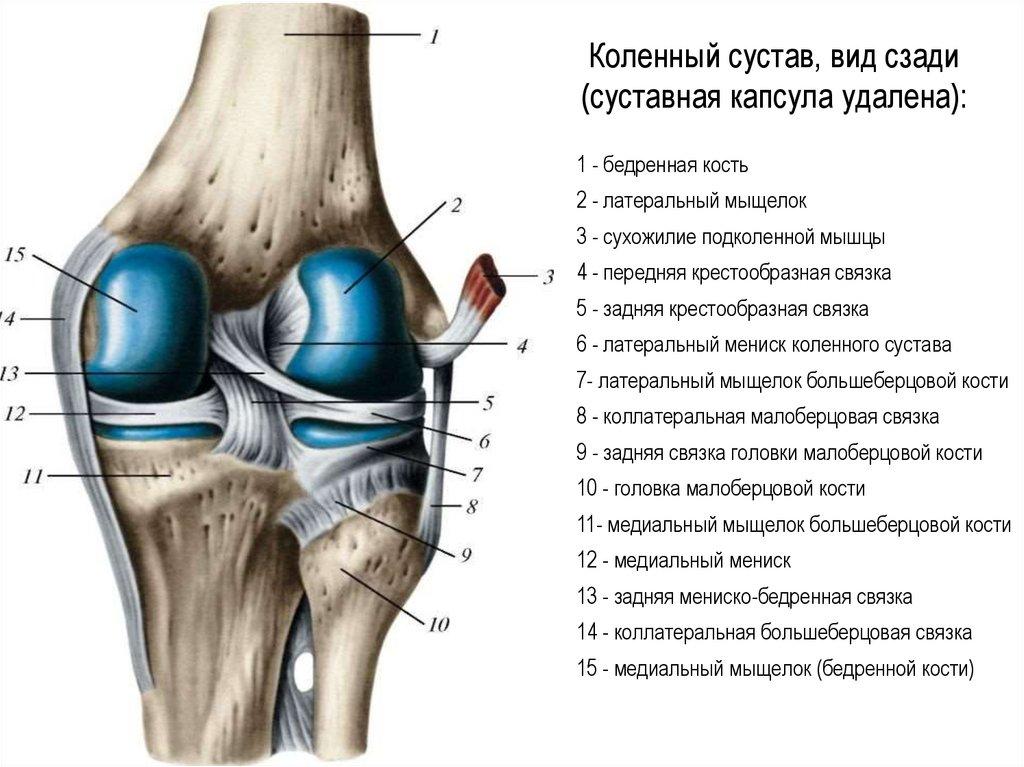 Можно ли укрепить связки коленного сустава, и как это сделать?