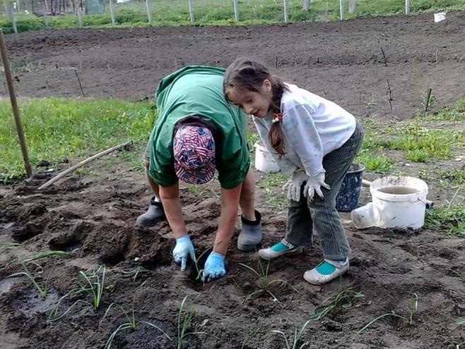 Как подготовить огород к новому сезону   дела огородные (огород.ru)