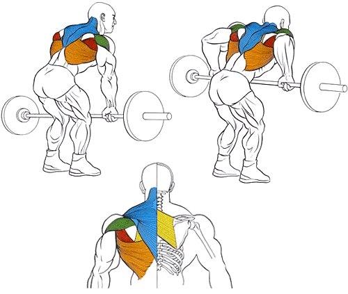 Тренировка мышц спины с гантелями: основные упражнения, принципы и особенности