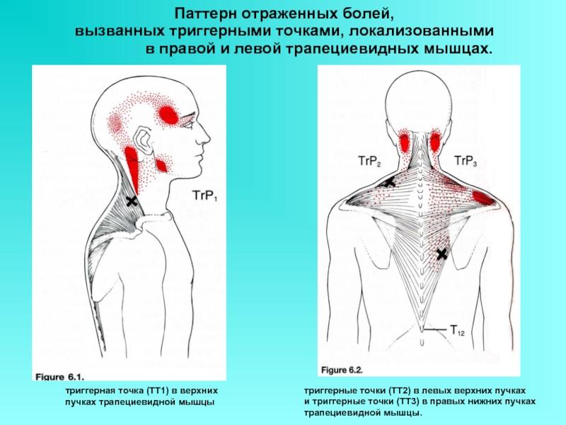 Как при остеохондрозе снять спазм мышц шеи и плеч: каким образом можно расслабить тело при помощи медикаментов, лечебной физкультуры, массажа и других методов?